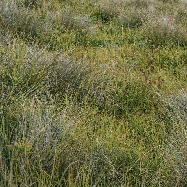 Gras für Graspapier